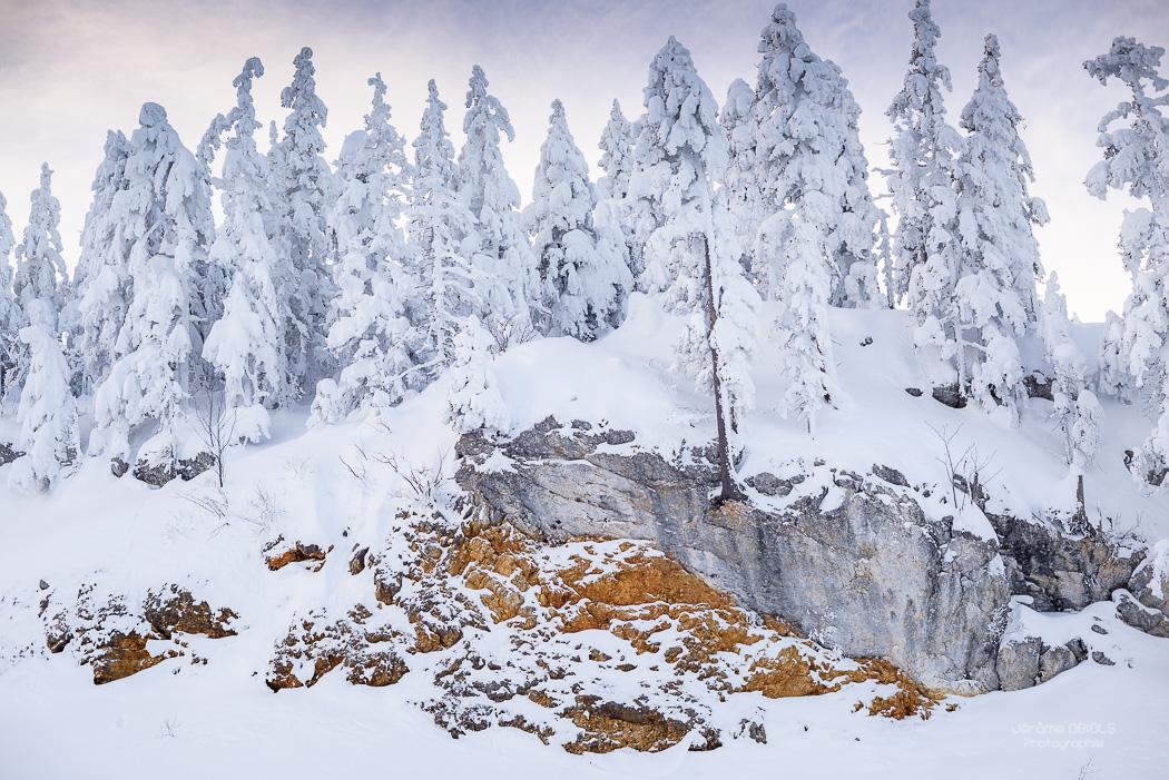 Sapins sous la neige et rochers ocre. Parc Regional Naturel du Vercors.
