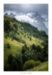 Alpages et arbres verts devant la Meije et le glacier du Tabuchet.